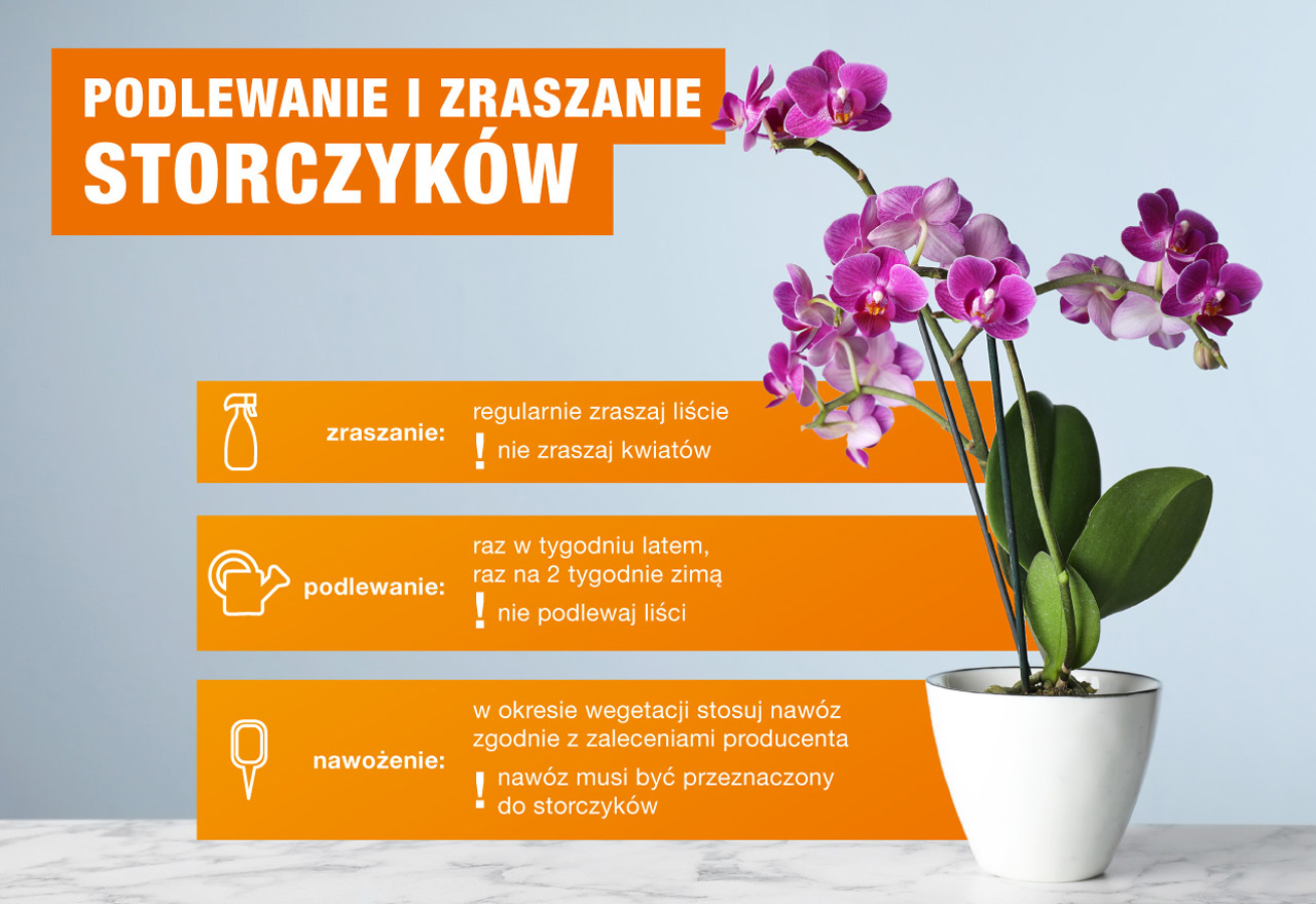 uprawa storczyków – infografika OBI