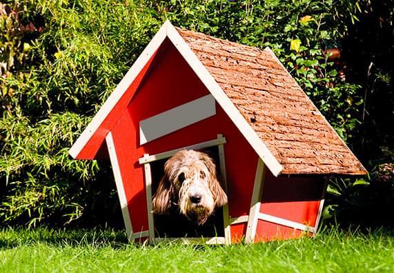 Buda dla psa w stylu skandynawskim