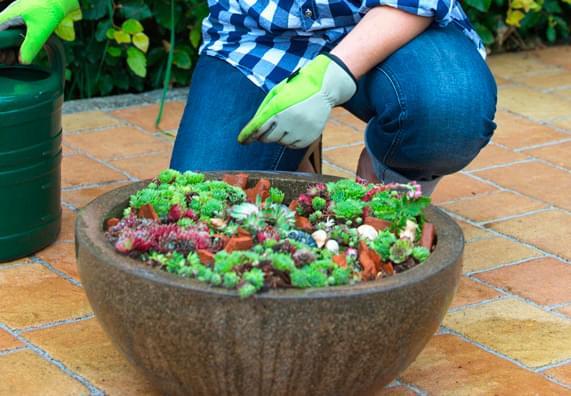 Sadzenie i przesadzanie roślin