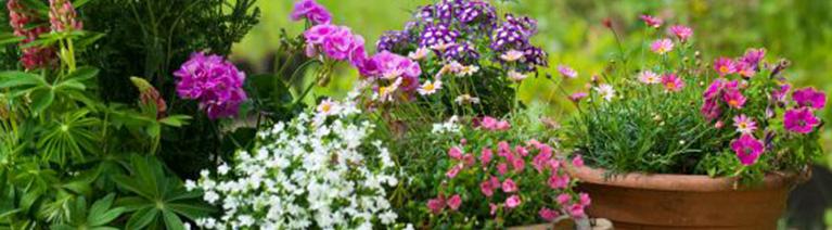 Rośliny kwitnące latem i jesienią