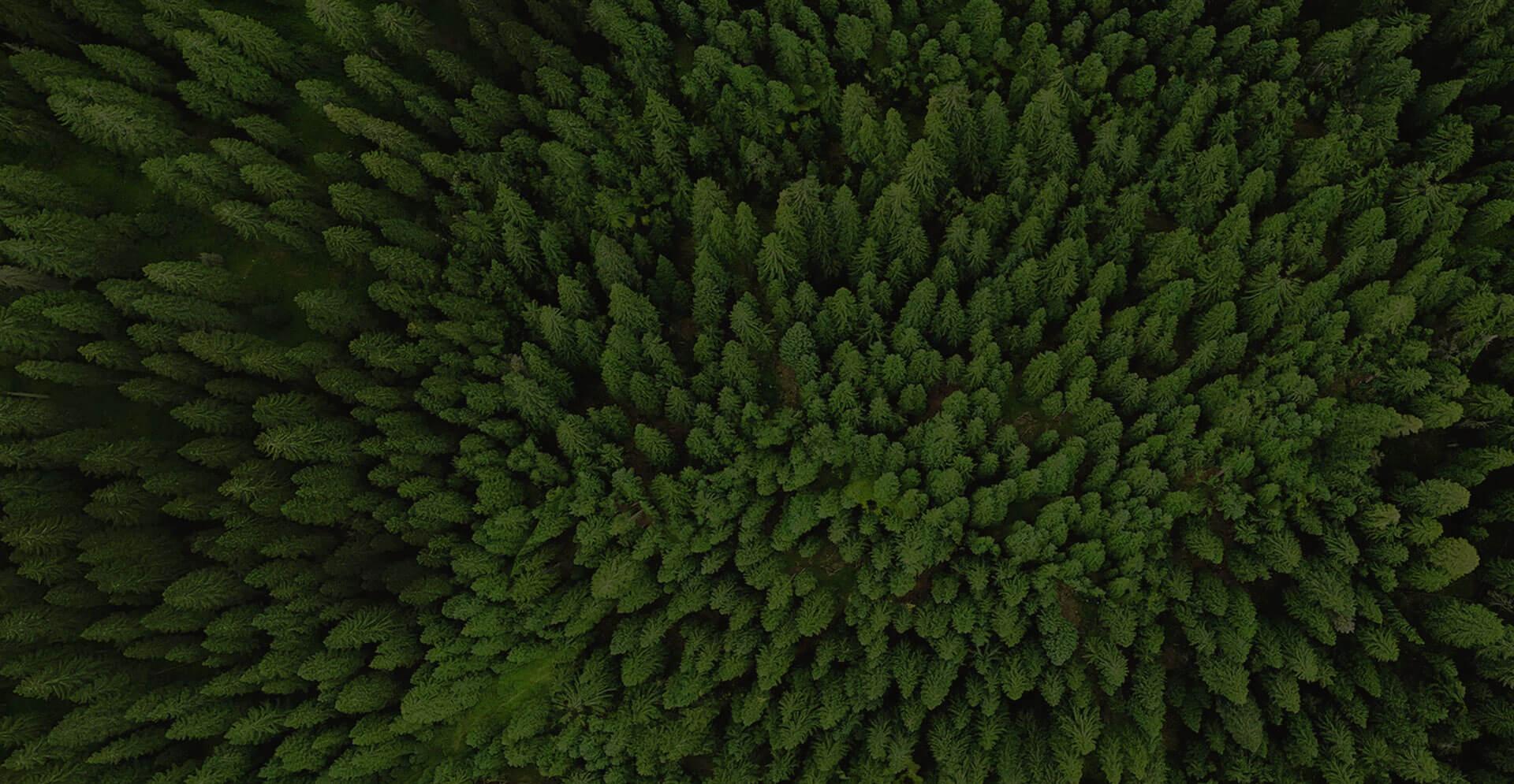 Podarujemy drzewa naszej polskiej przyrodzie. OBI - Las na zawsze.