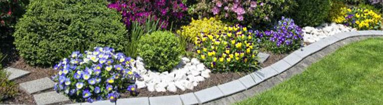 Jakie rośliny do ogrodu wybrać?