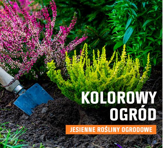 Kolorowy ogród - jesienne rośliny ogrodowe