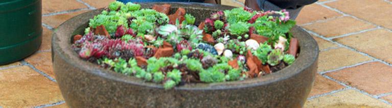 Sadzenie i przesadzanie roślin w donicach